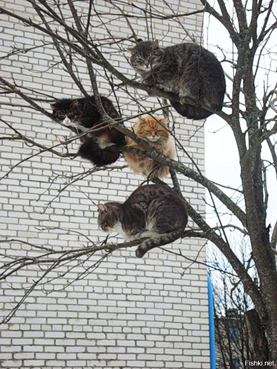 кто хотел картинки коты прилетели собирается