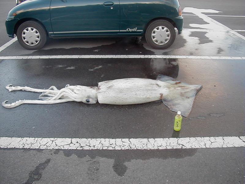 Даже кальмар паркуется по правилам. Гений парковки, парковка, прикол, юмор