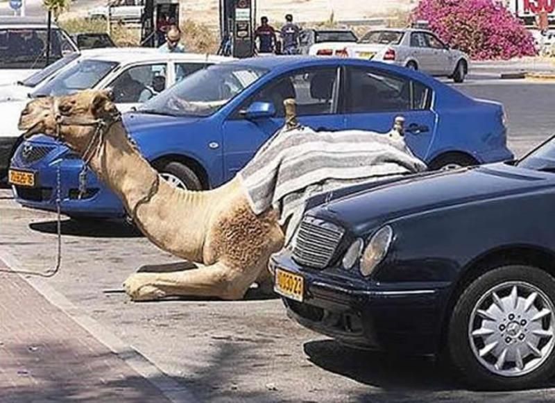 Бедуин приехал за покупками. Гений парковки, парковка, прикол, юмор