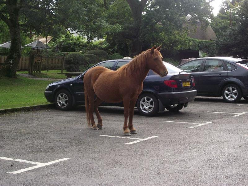 Припарковал свой Мустанг. Гений парковки, парковка, прикол, юмор