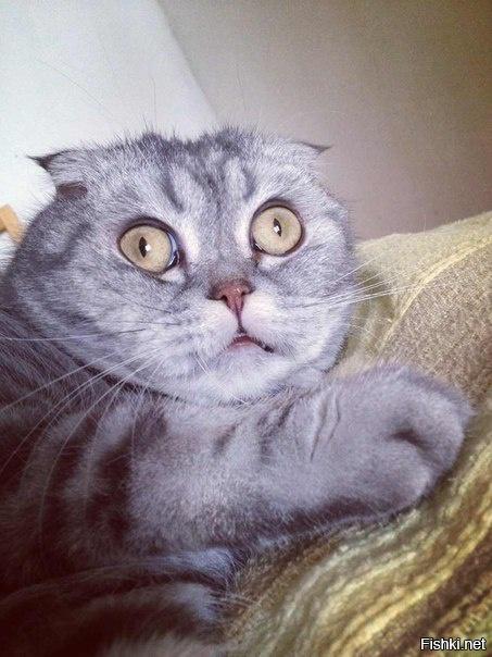 Картинка кот связь потеряна