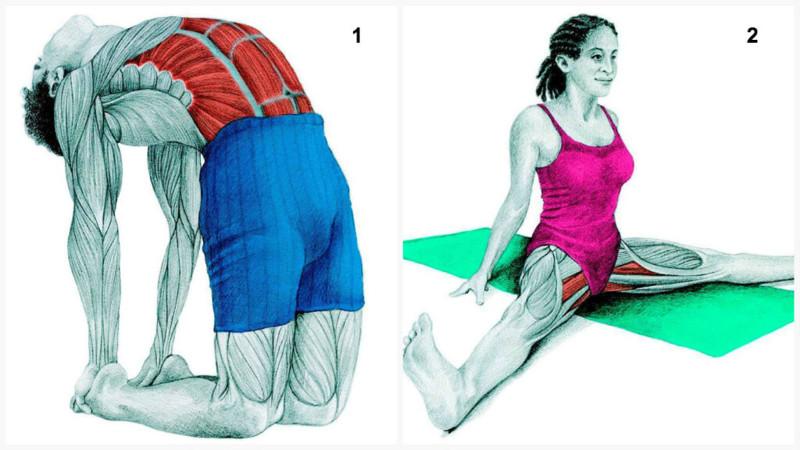 Что Вы тянете на самом деле: растяжка мышц в картинках мышцы, растяжка, спорт, фитнес