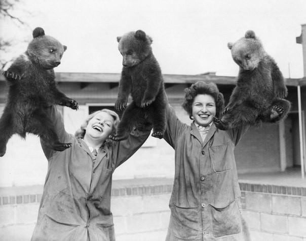 Первый выход (вынос) на люди трех бурых медвежат в Уипснейдском зоопарке, Англия история, люди, редкие, фото