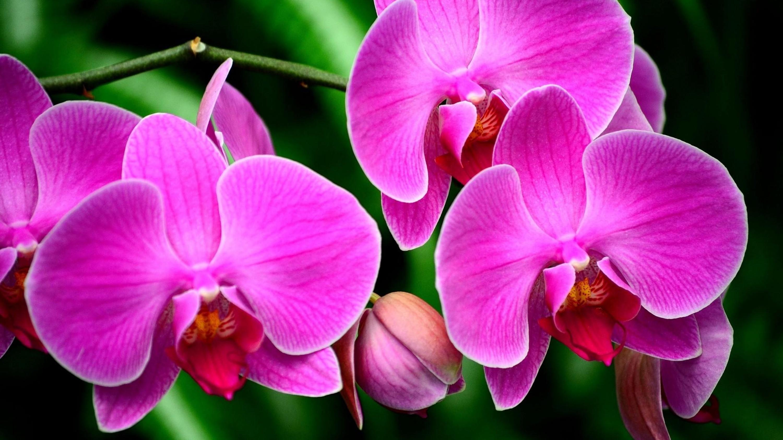 Орхидея фото красивые, сделать своими руками