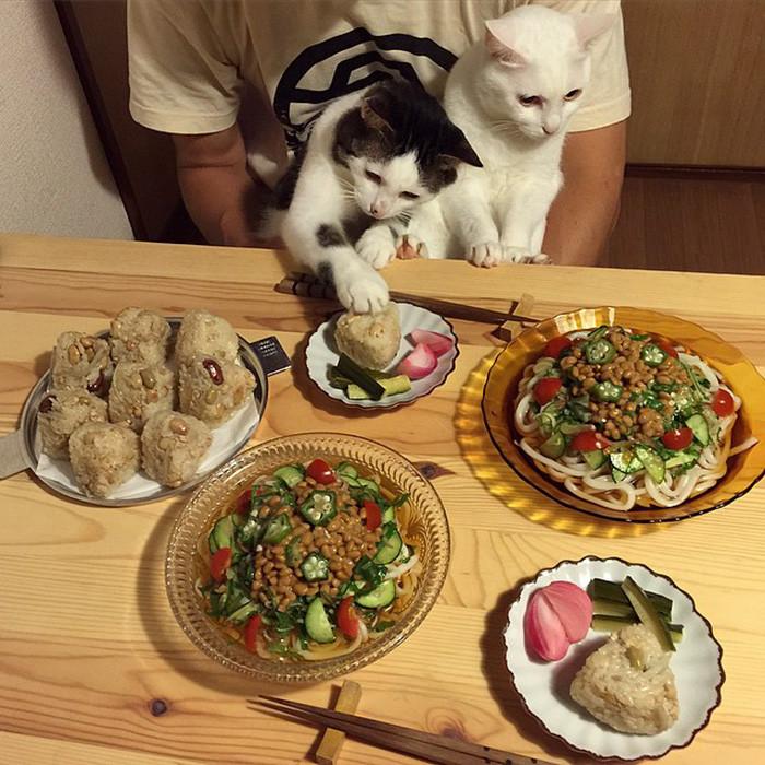 Ужин картинка прикол, благодарности девушке другу