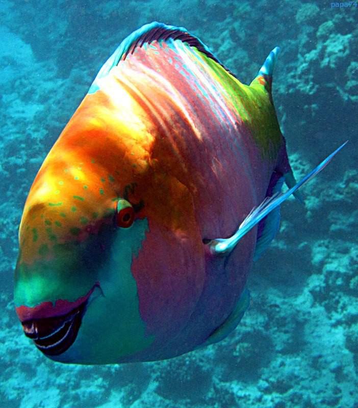 все редкие рыбы с картинками рассыпчатое, это печенье