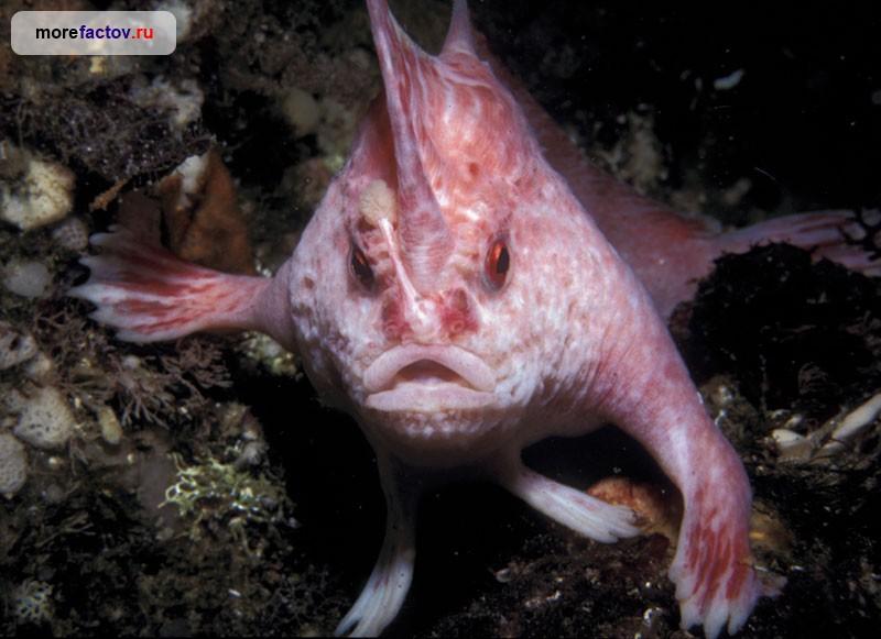 Необычные морские животные мировой океан, необычные животные, факты
