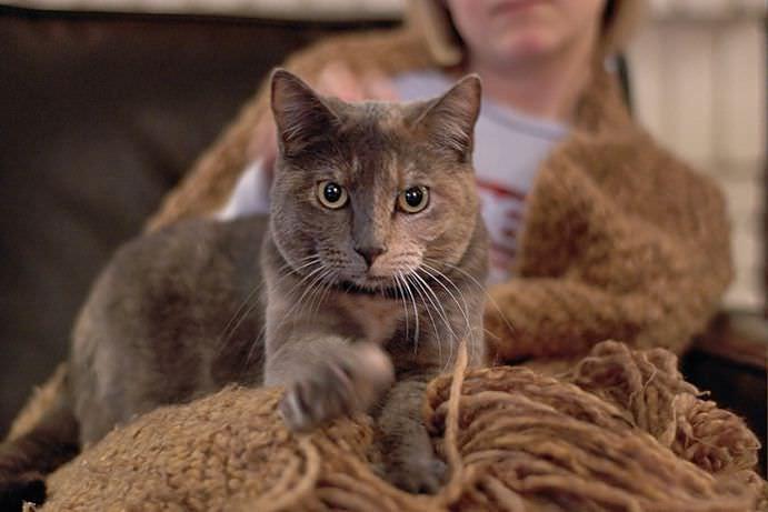 Почему кошка топчет вас лапками? Ответ найден! животные, коты