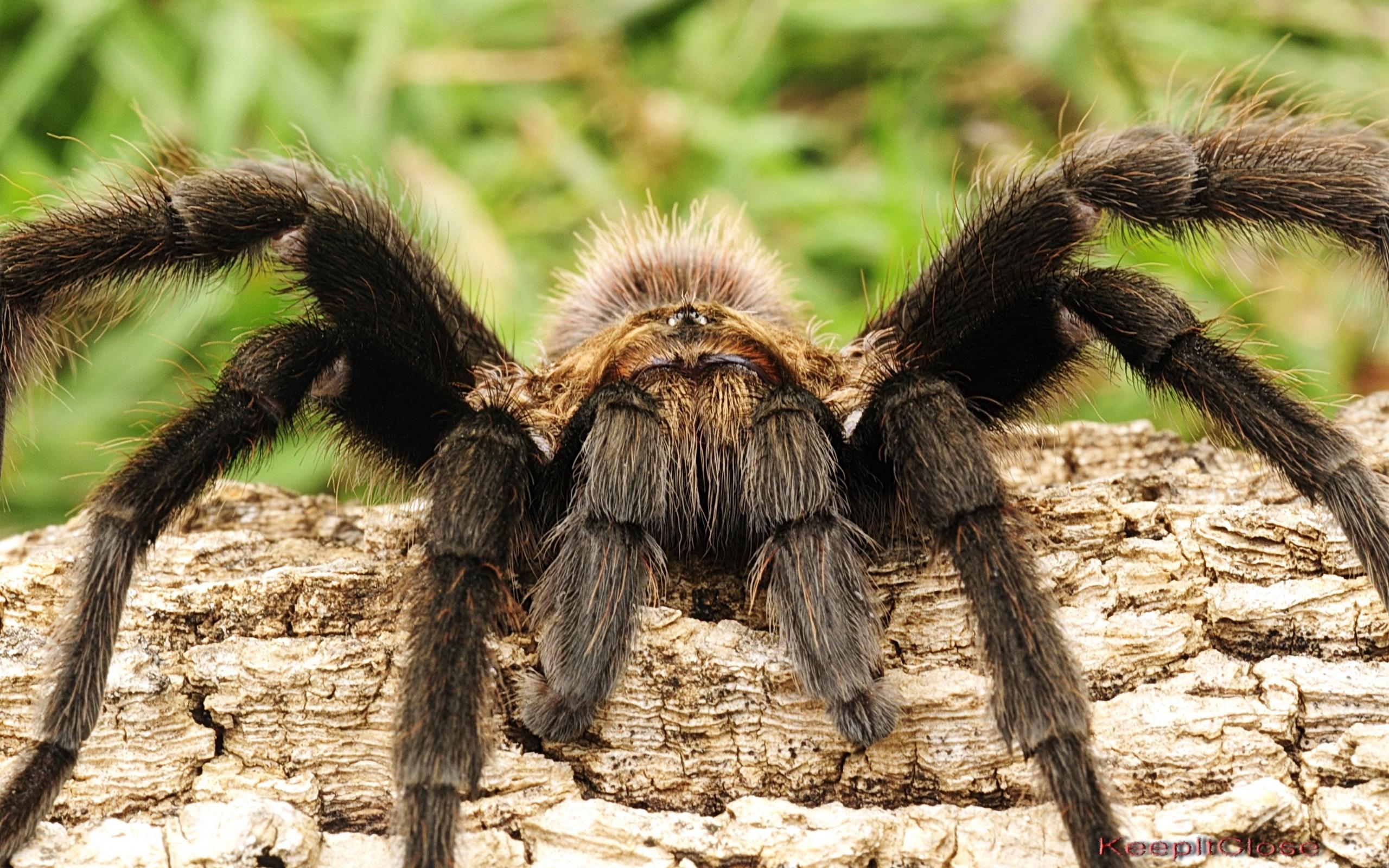 интересные фото пауков сердце, печень