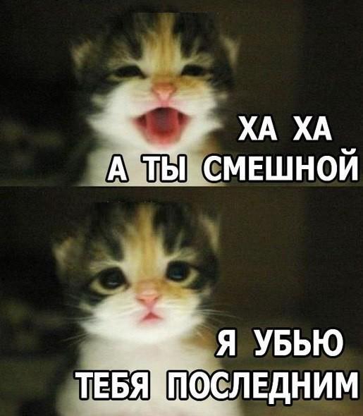 Картинки про, картинки смешные с надписями вконтакте