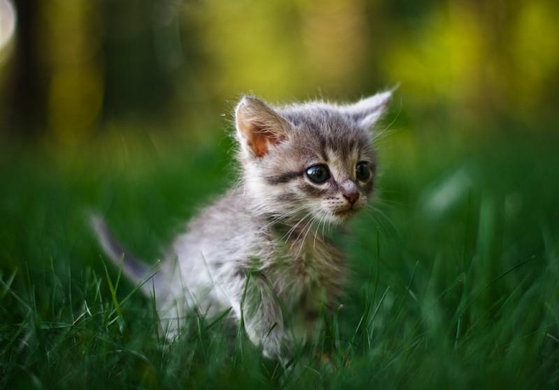 Фотографии про смешных котят, открытку днем