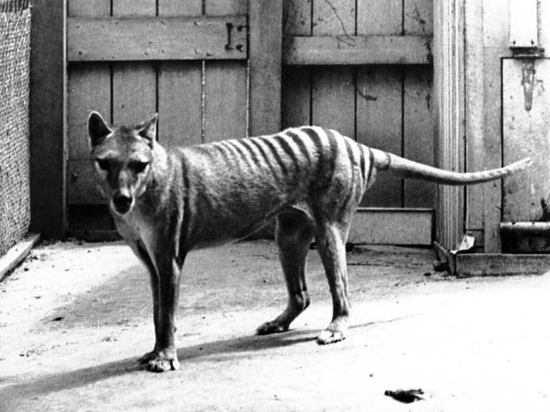 Исчезнувшие виды животных фильм