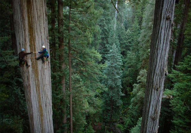 Да, это дерево спорт, ужас, экстрим