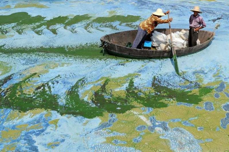 12. 12. Рыбак в Китае. За ряской не видно воды. мир, природа, странности, фотографии, человек