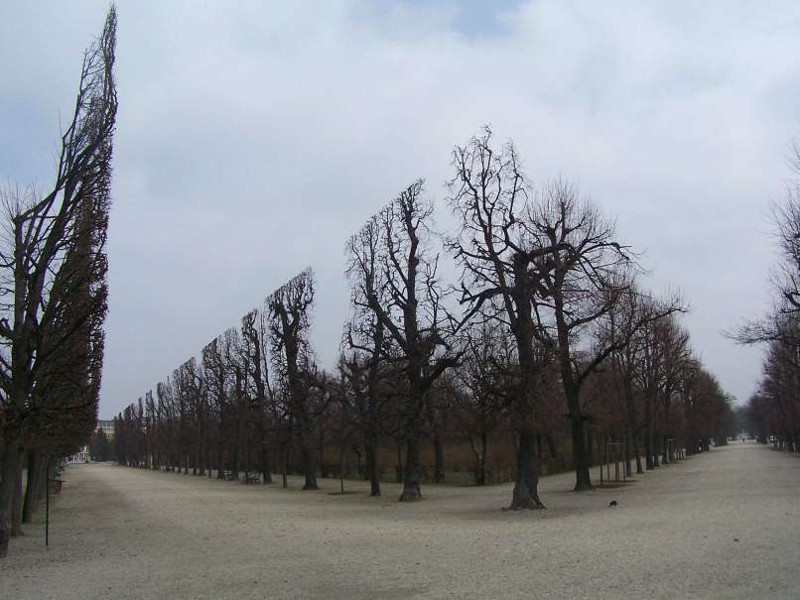 5. 5. Эти деревья подстрижены и образуют прямую линию. Выглядит как что-то невероятное! мир, природа, странности, фотографии, человек