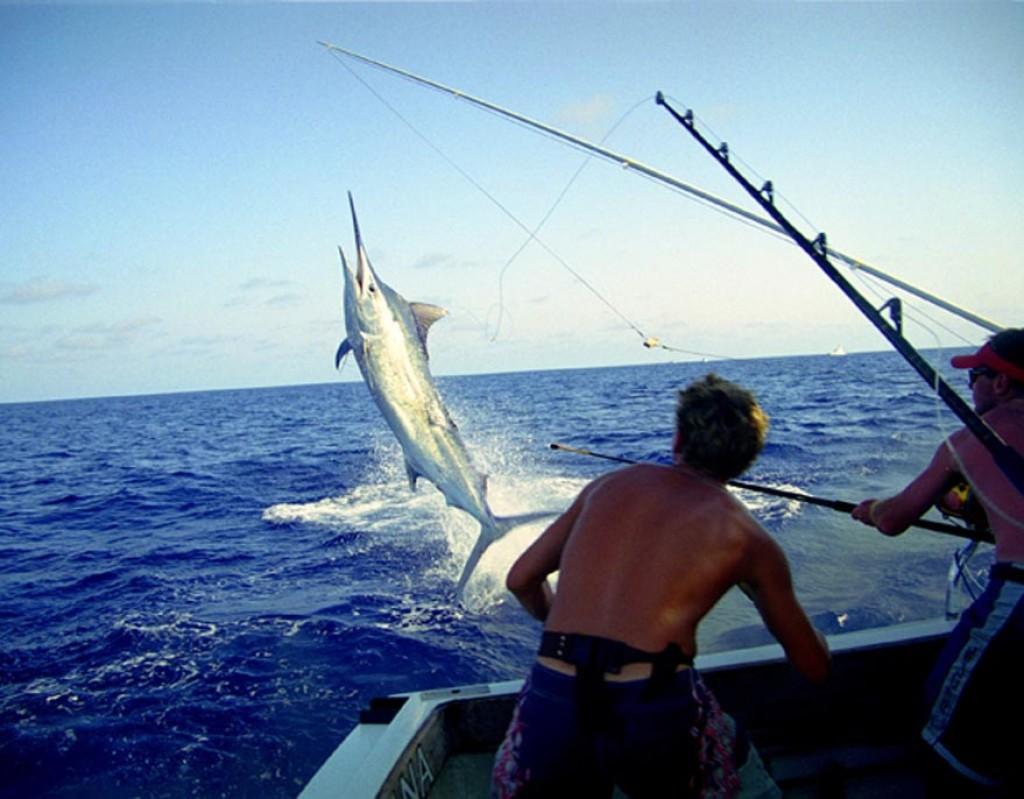 его фото рыба меч на удочку производится перенос