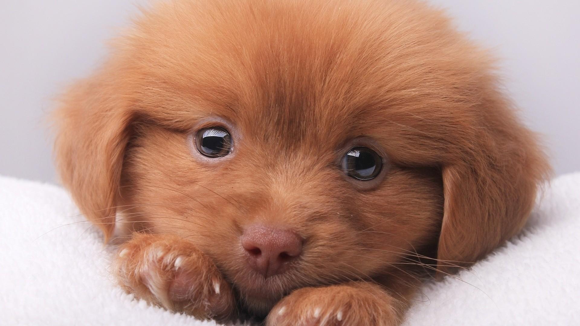 очень самые милые животные в мире фото иллюстрированный мастер-класс