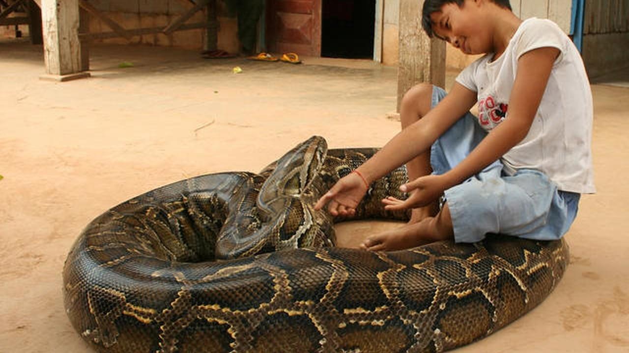 трахать змею найдено более 1000 порно видео
