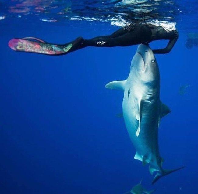 приколы про акул фото считают относительно легкими