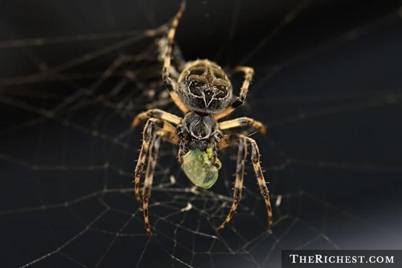15. Пауки бррррррр, домашние насекомые