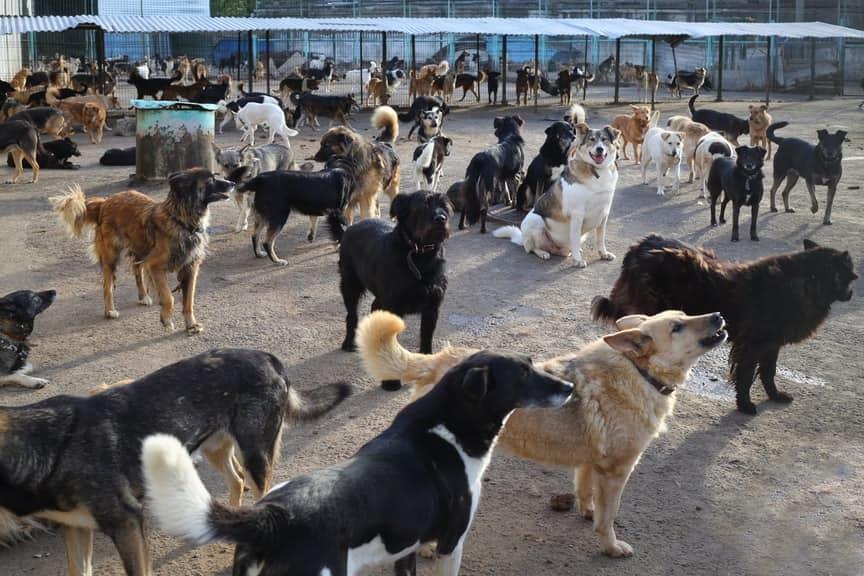 Картинки по запросу Гепатит С + 50 бездомных собак