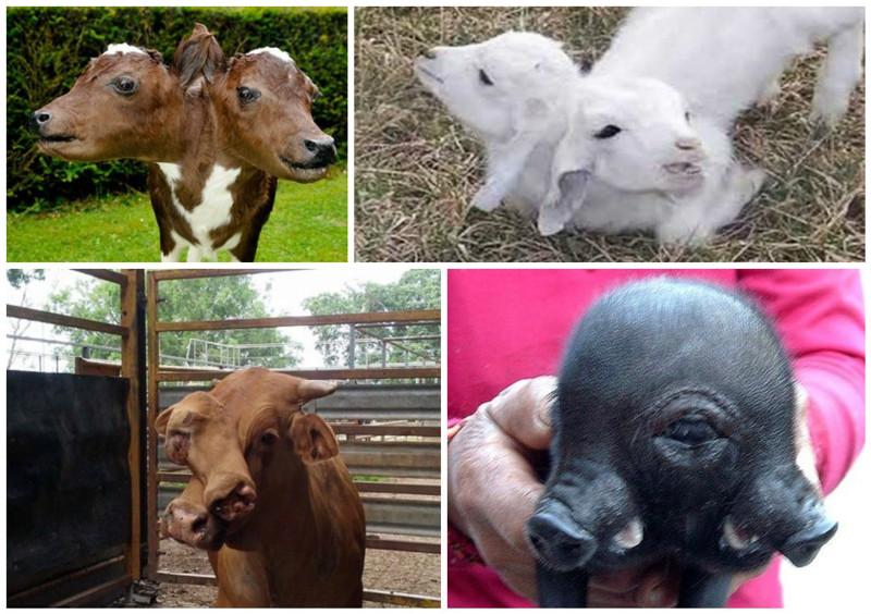 картинки про животных мутантов остальное компромисс, или