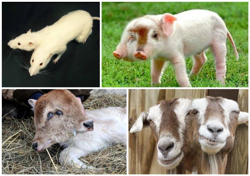 картинки про животных мутантов лист нержавеющей