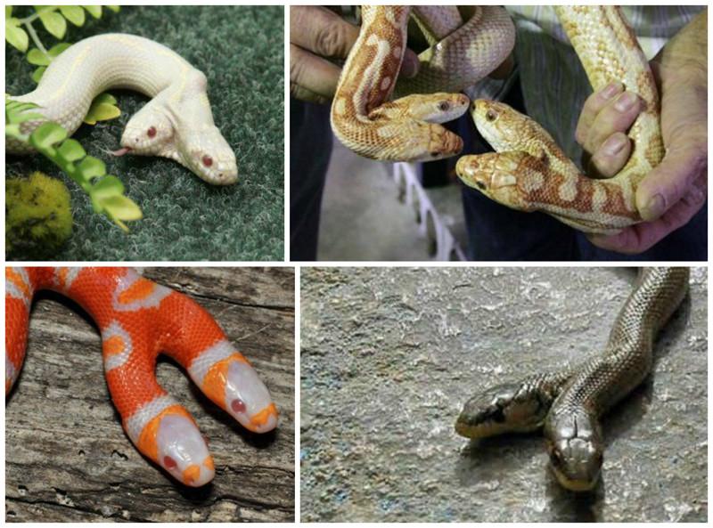 Картинки мутации человека и животных