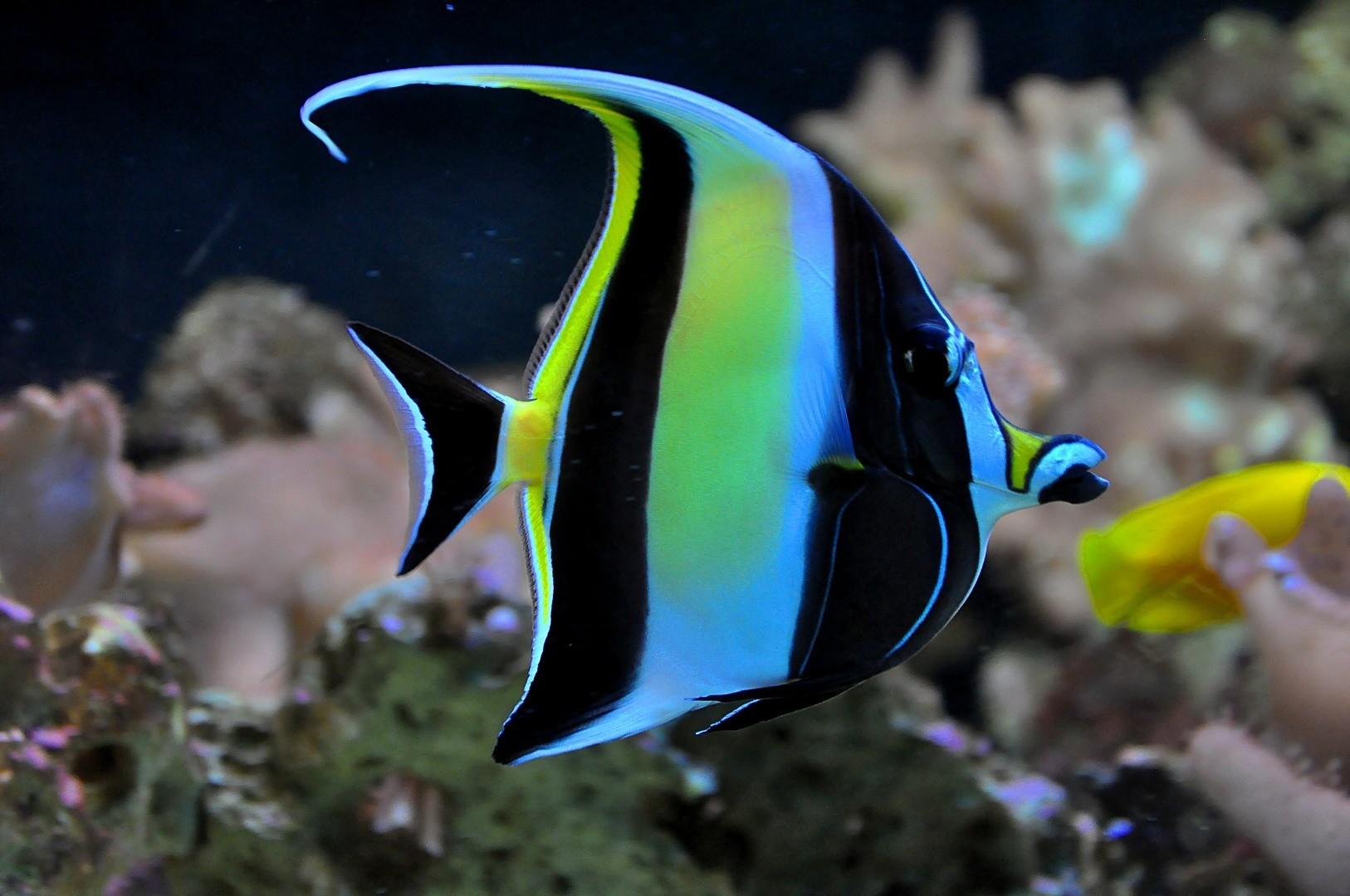 Фото с красивыми рыбками