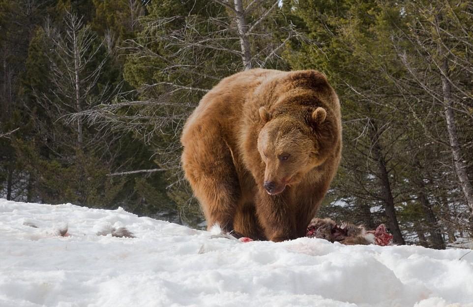 философ аристотель волк медведь фото летняя резиденция сербской