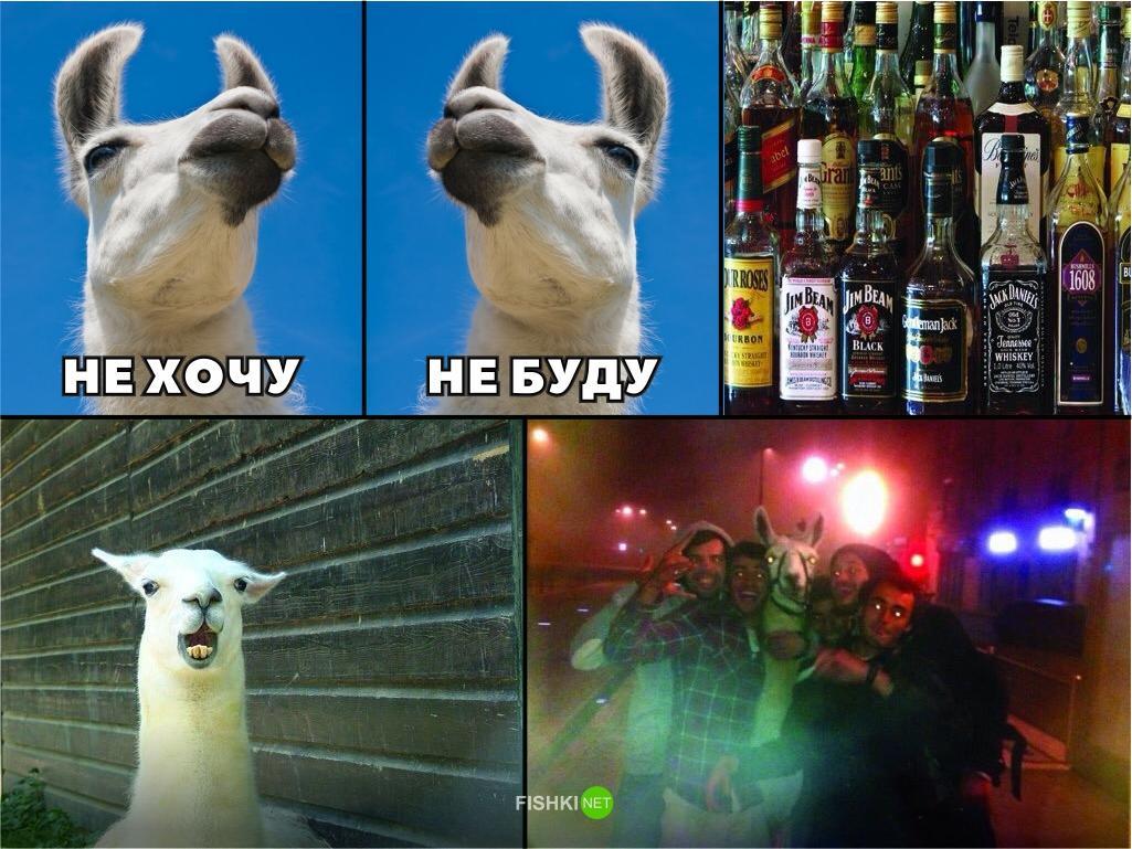 Алкоголь веселые картинки, днем рождения