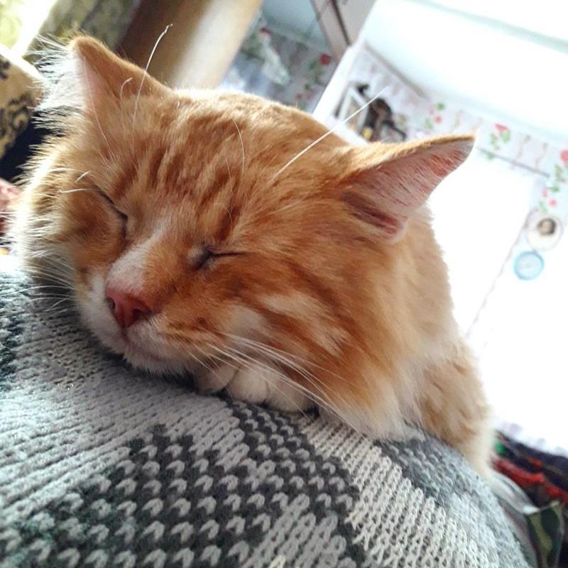 А вот и настоящий деревенский котяра Душевно, деревня, красота, счастье, уют