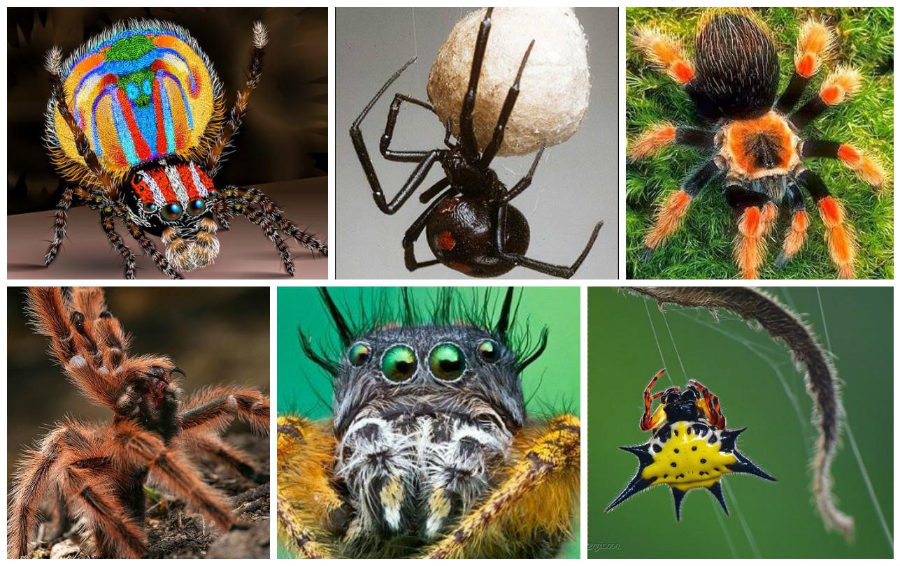 информация и картинки о пауках плодовые деревья