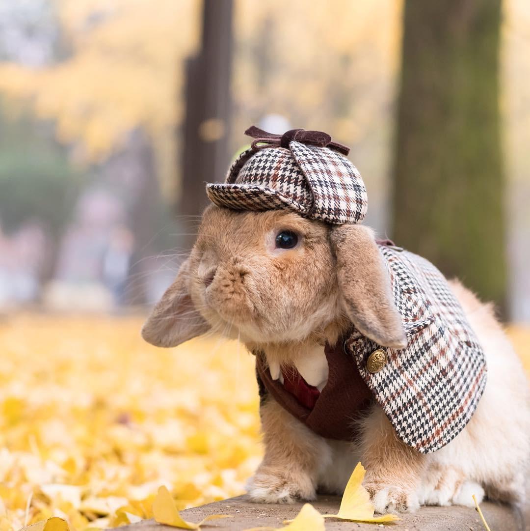 спустя картинки кролик в костюме большое количество