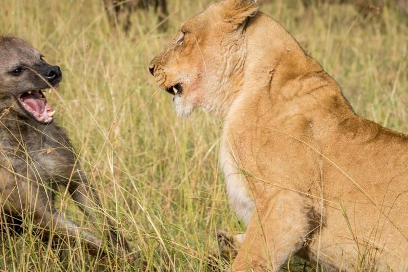 Что любят львы с именем андрей в сексе