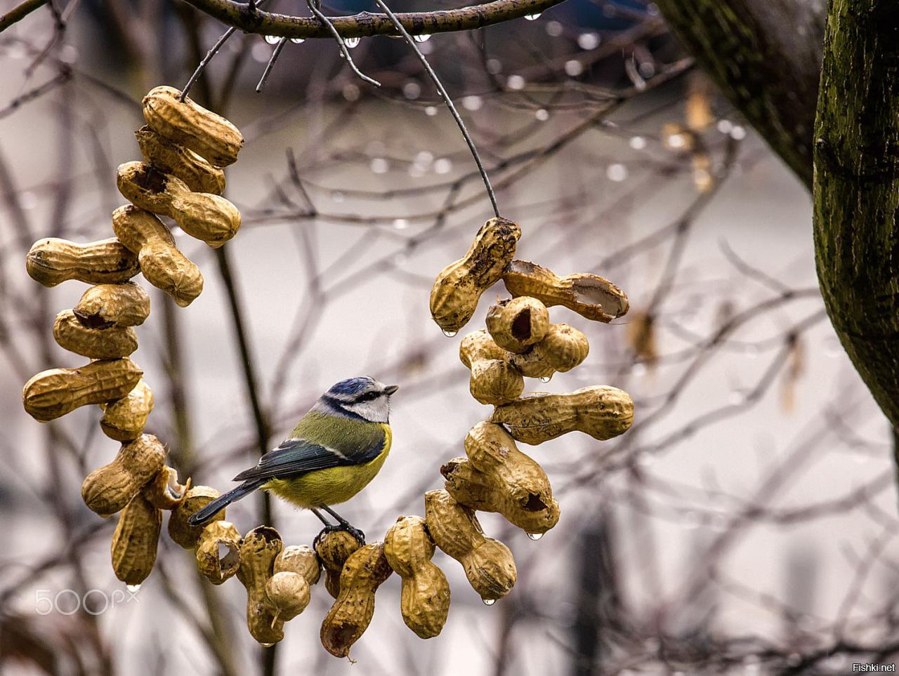 Днем, прикольные картинки с птицами зимой