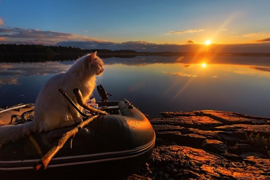 кот и рыбалка картинки для относится
