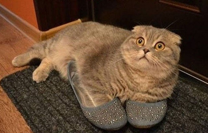 Без кота и жизнь не та животные, коты