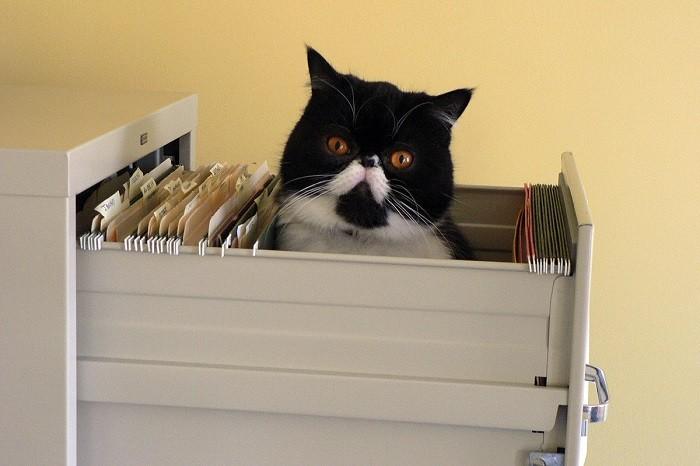 Настоящий хранитель секретов! животные, коты