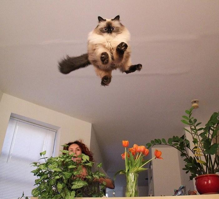 Полет валькирий животные, коты