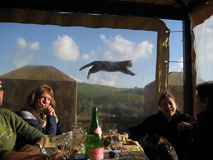 Тем временем в параллельной вселенной... животные, коты