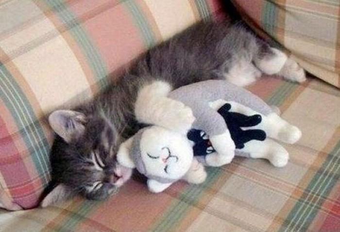 Замечательная рекурсия: кот обнимает кота, обнимающего кота. животные, коты
