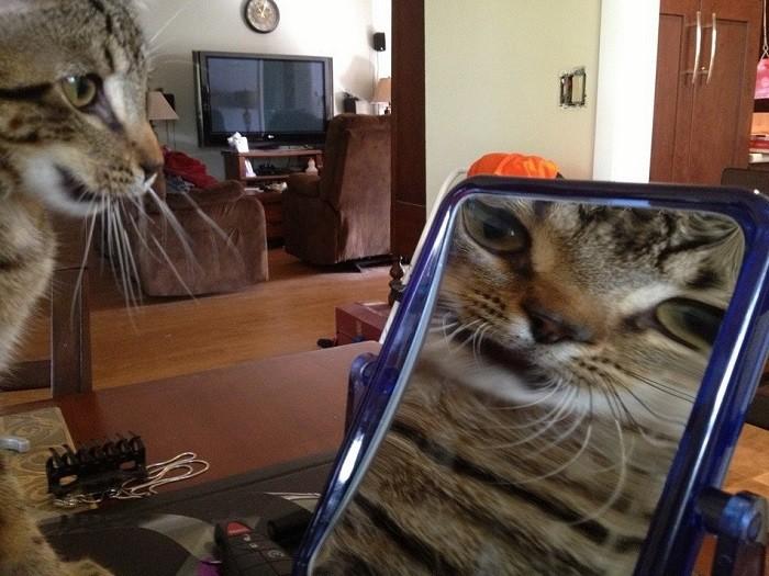 Свет мой, зеркальце, скажи! Да всю правду доложи: «Я ль на свете всех милее, всех румяней и белее?» животные, коты