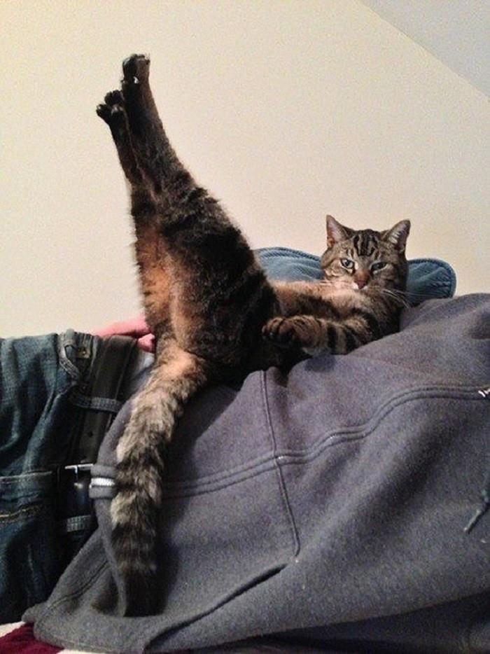 Котячее кабаре животные, коты