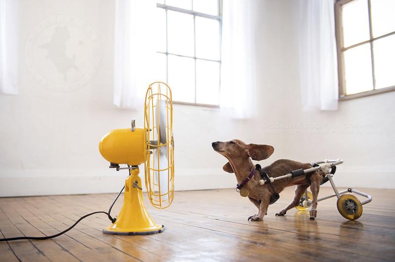 картинка собака с вентилятором народные средства