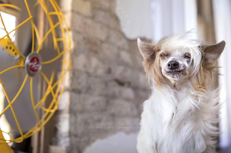 работе придерживаются картинка собака с вентилятором для рабочего