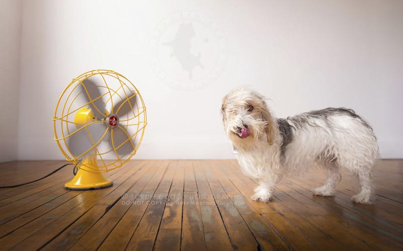 картинка собака с вентилятором достопримечательности морское