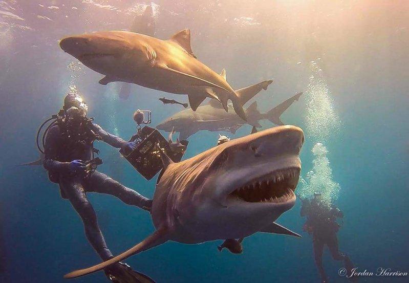 Веселые картинки с акулами