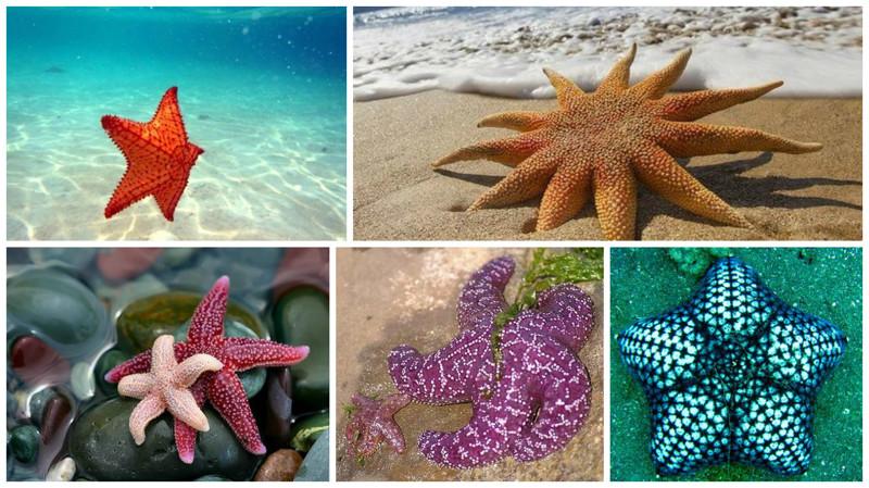 Морская звезда - это не рыба, а беспозвоночное животное.