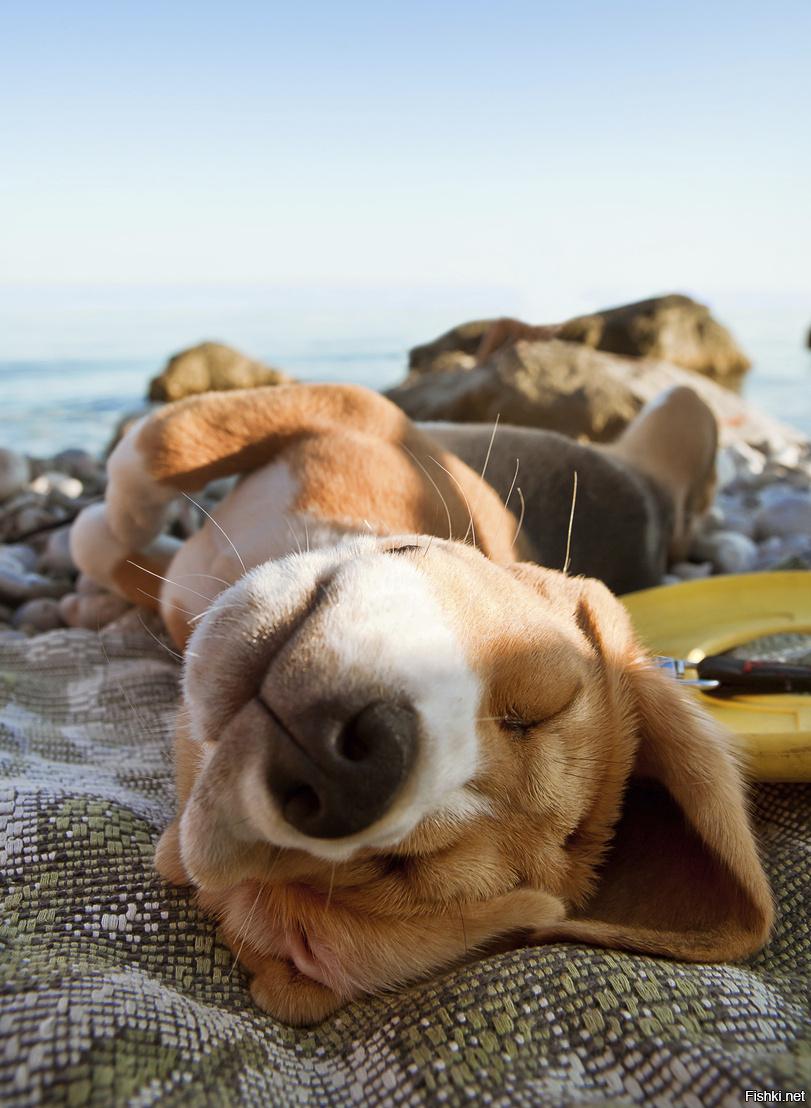 Прикольные картинки животных на пляже, именем